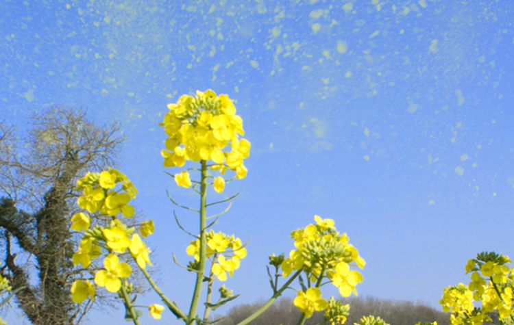 A hay fever survival guide not to be sniffed at