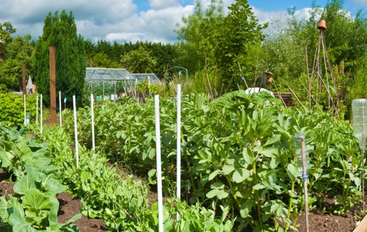 The positives of growing your own fruit and veg